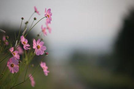 flowers-3130011__480